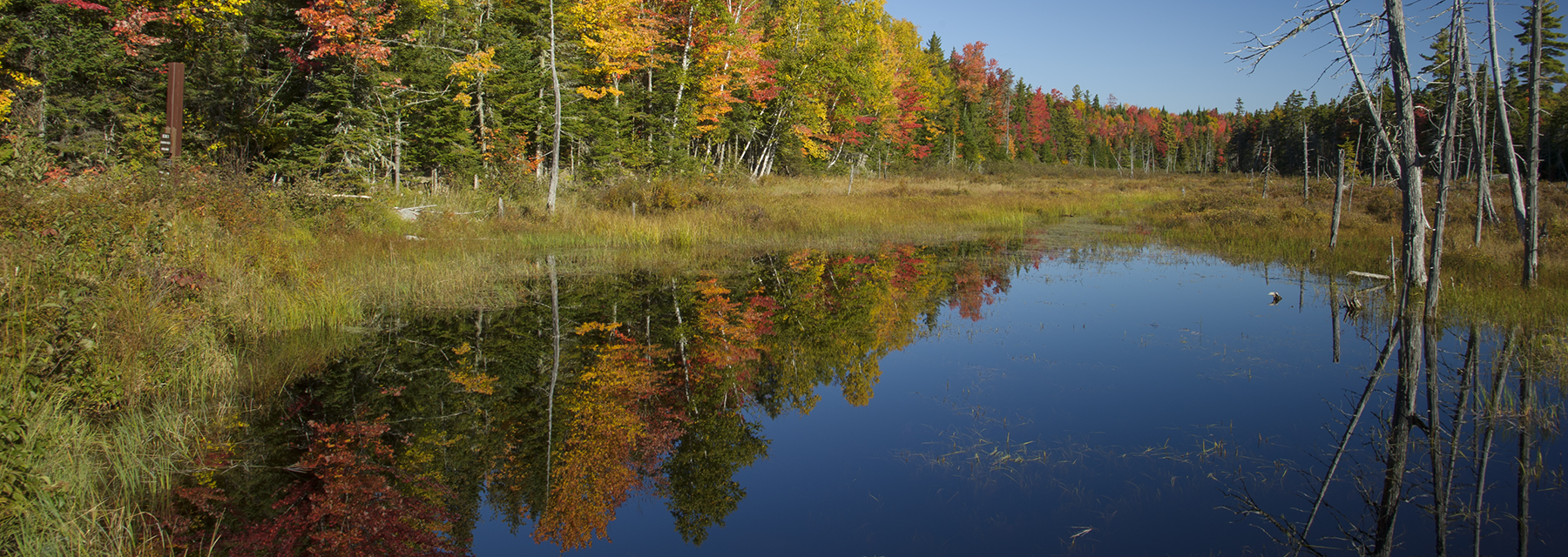 Katahdin Woods and Waters First Marsh Reflection